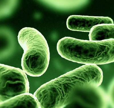 batterio-escherichia-coli