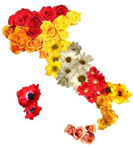 italia_fiori